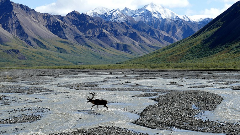 arctic oil leases