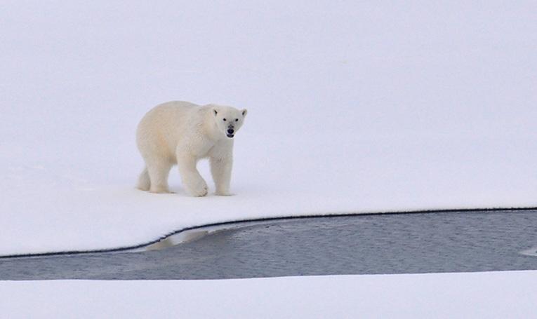 Alaska leases shrank