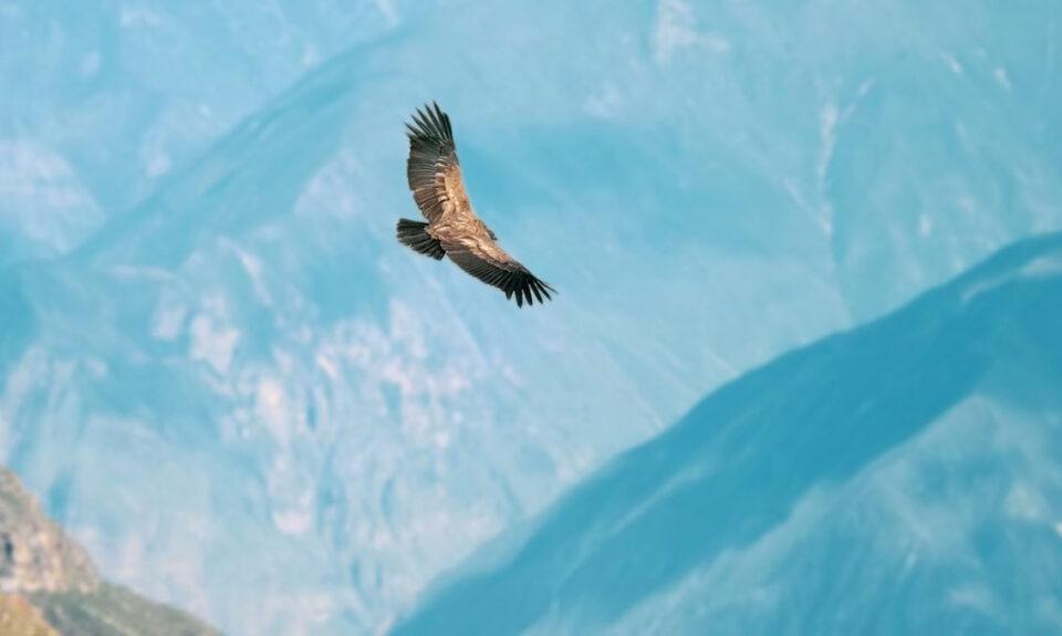 Condor Avangrid