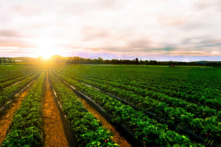 Ontario-creates-opportunities-for-RNG-in-farming-and-agriculture.jpg